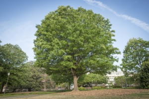 Trees can soak up thousands of gallons of stormwater a year, clean the air and lower energy bills.