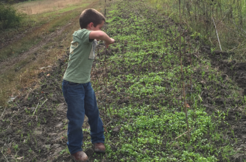 The 4-H Wildlife Food Plot Project teaches South Carolina youth about wildlife habitat management.