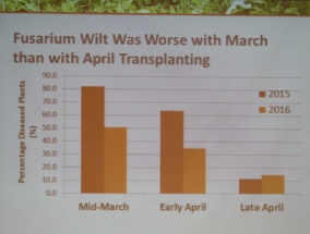 Charts shows the presence of Fusarium wilt declining as watermelons are planted later in the season as soil temperatures increase.