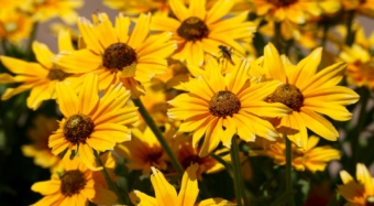 The Susan K. Barr Pollinator Garden at the S.C. Botanical Gardens features native flowering perennials and other plants that attract pollinators.