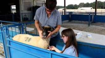 Clemson University College of Agriculture, Forestry and Life Sciences students are prepared to start working in the agriculture field after they graduate. An example of this is the fescue toxicosis study Jessica Britt, a Ph.D. student in the animal and veterinary sciences program, is helping conduct.