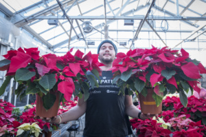 Clemson University horticulture student Jason Warren, a junior from Houston, Texas, holds two Poinsettia plants in one of Clemson's greenhouses, Dec. 1, 2016.