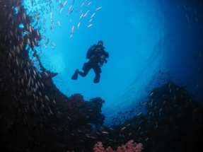 Suzanne Roat, who is shown here, enjoys scuba diving in her spare time.