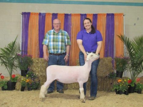 Allison Harmon of Leesville is sheep champion for the 2017 Little North American contest.