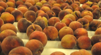 peach conveyor