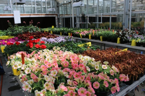 This year's Clemson Horticulture Student Plant Sale feature an arrayof annuals, plants for hanging baskets, vegetable and herb transplants and more.