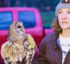 a barred owl and the history teacher