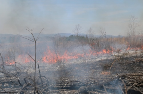 Prescribed fire in the Appalachian Mountains.