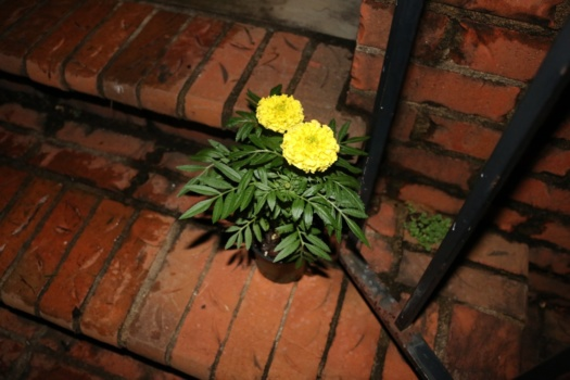 The cempazuchitl, Mexican marigold, is believed to attract souls of the dead to